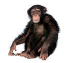 Другие обезьяны